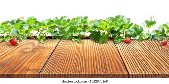 strawberry plant with empty brown wooden table top is on white background and clipping path for strawberry plants and wood floor