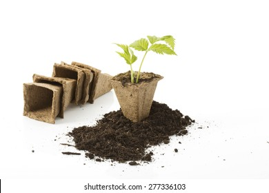 Strawberry plant, soil, peat pots on white background