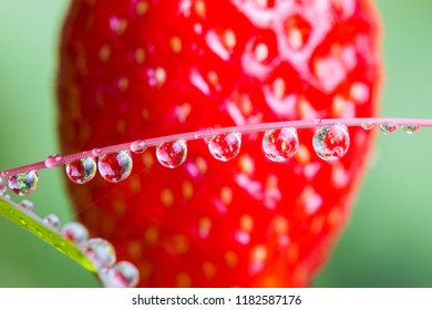 strawberry reflected in dew