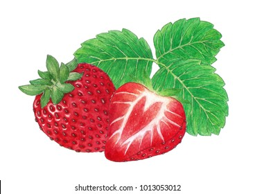 Strawberry watercolors paintings.