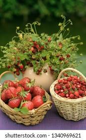 Strawberry and wild strawberry baskets