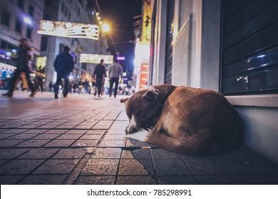 Ein streunender verlassener Hund in der Nacht auf der belebten Stadtstraße in Istanbul. Menschen, die an dem hungrigen verlassenen Hund vorbeigehen.