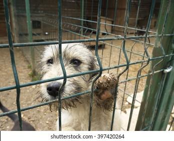 stray abandoned puppy in shelter, sad puppy eyes