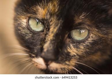 Stray black cat beautiful face