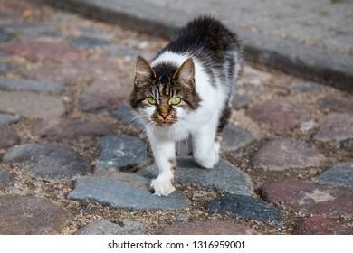 de87a1ac4c Stray cat. Abandoned cat.