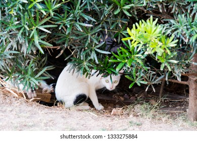 a stray cat being careful on it's surroundings