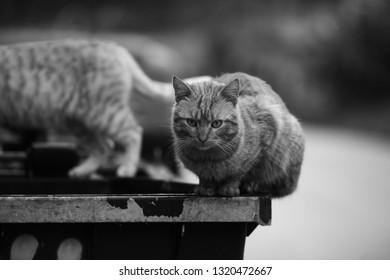 Stray Cat Black and White Portrait