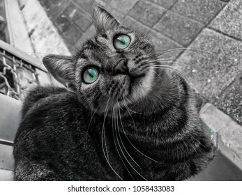 Stray cat with blue eyes in Istanbul looks at camera