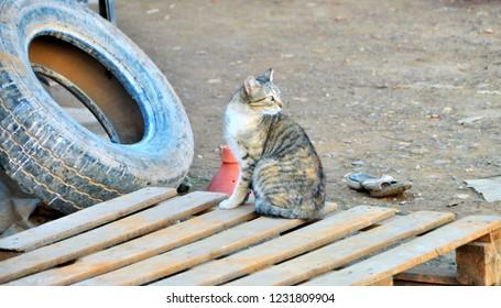 Stray Cat of Complexe des Potiers / Pottery Complex, Oulja, Salé, Rabat, Morocco