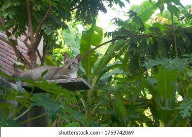 A stray cat in a forest park