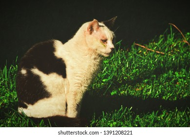 A stray cat in a garden, the subject has black and white patches and a crestfallen expression on her face.