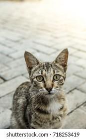 Stray cat in Havana, Cuba
