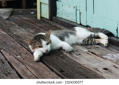 Stray cat layingon weathered  wooden planks