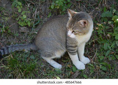 A stray cat looking around