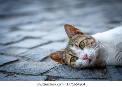 stray cat lying down on paving stones