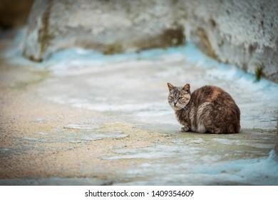 stray cat in Oia on Santorini