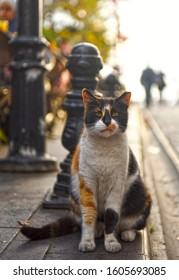 Stray cat on the street of Istanbul, Turkey. Istanbul is home to thousands of stray cats, who exist seamlessly within the city