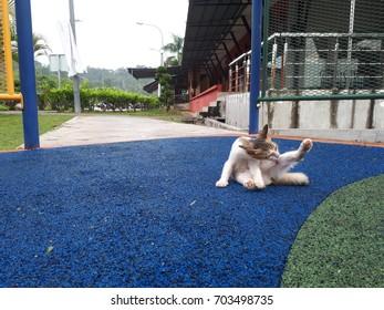Stray cat at a park