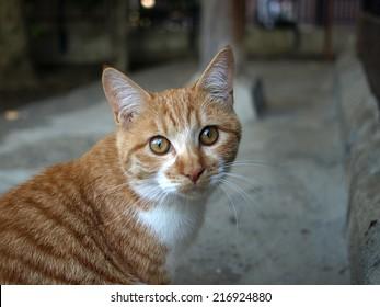 Stray cat photographed in a park in Yokohama, Japan.