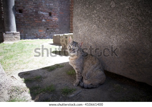 stray cat portrait resting in the shadow in a castle near an ancient tombstone