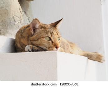 Stray cat relax in Bangkok. - Shutterstock ID 1280357068