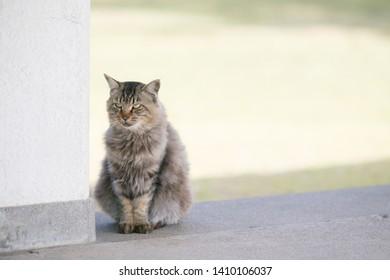 A stray cat in Sakurajima in japan.