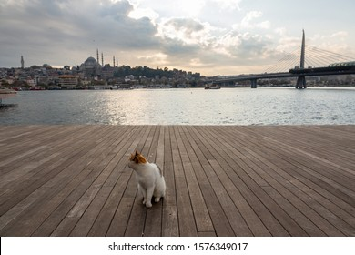 A stray cat sits on the boardwalk of the shoreline of Karakoy, Istanbul