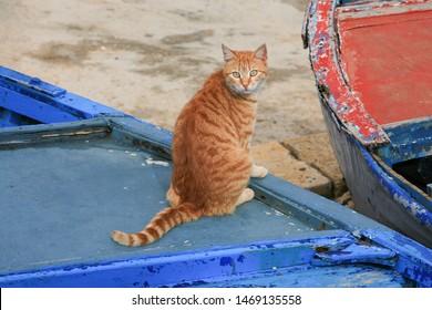 Stray cat sitting on a boat in the Corniche, the promenade along the Mediterranean coast, in Beirut, Lebanon.