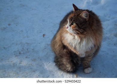 Stray cat sitting on the snow
