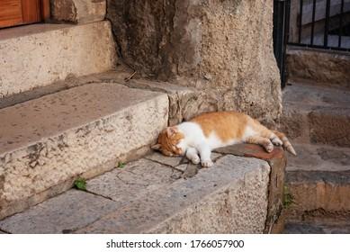 ドブロヴニクの古い町の裏通りで眠る野良猫