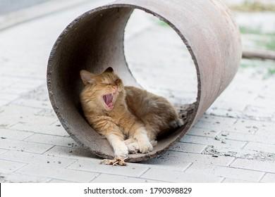 a stray cat sleeps on the street, stray cat