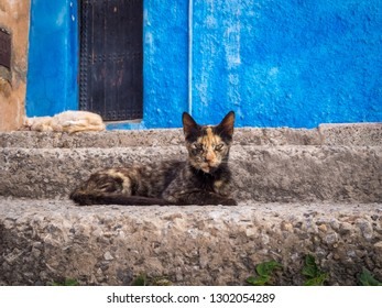 Stray cat spending time at the streets of Rabat, Morocco