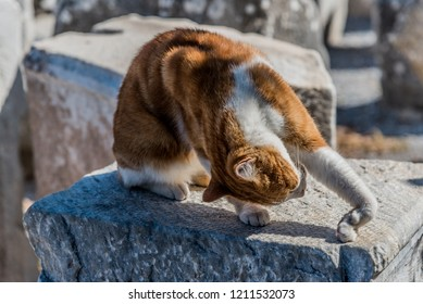 Stray cat with stretching pose
