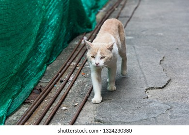 Stray cat strolling streets with determination