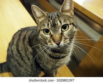 Stray cat in Turkey
