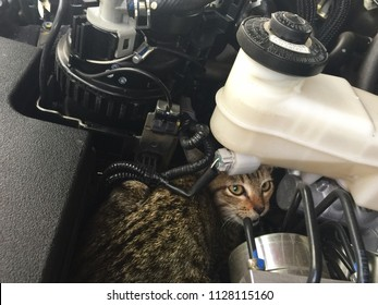 Stray cat under the hood of my car