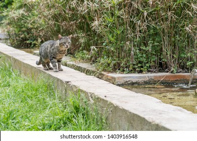 Stray cat walking near a fountain