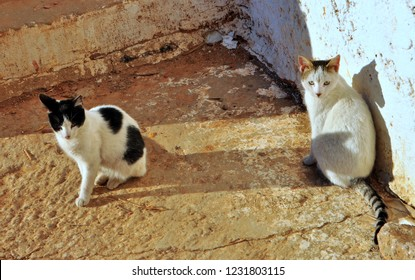 Stray Cats of Complexe des Potiers / Pottery Complex, Oulja, Salé, Rabat, Morocco
