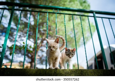 Stray cats during holiday in Italy