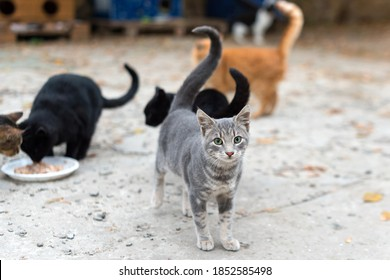 Stray cats eating on the street. A group of homeless and hungry street cats eating food given by volunteers. Feeding a group of wild stray cats, animal protection and adoption concept