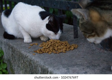Stray cats eating together outside in winter, Athens, Greece