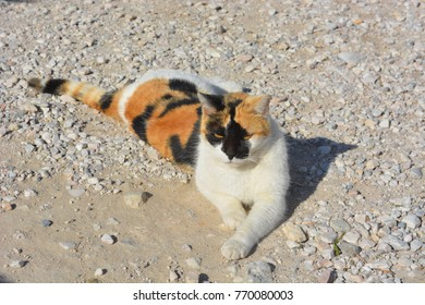 Stray Cats of Greece
