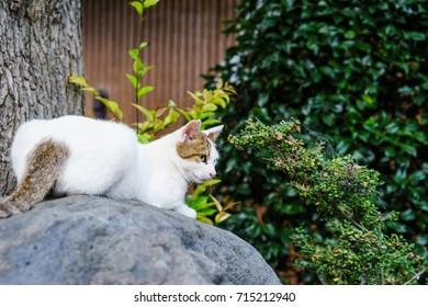 Stray cats lying on rocks