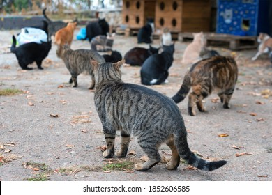 Stray cats on the street. A group of homeless and hungry street cats waiting for food from volunteers. Feeding a group of wild stray cats, animal protection and adoption concept.