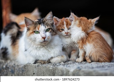 Stray cats on the streets of Cyprus