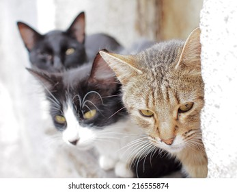 Stray cats photographed in Guanajuato, Mexico.