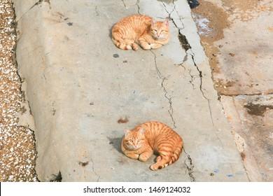 Stray cats sitting on the Corniche, the promenade along the Mediterranean coast, in Beirut, Lebanon.