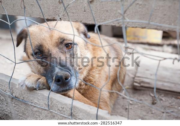 Chien errant derrière le corail d'un refuge de chien