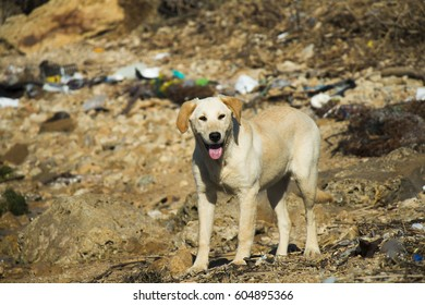 the stray dog ??puppy is between waste