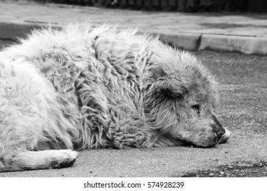 Stray dog, Bucharest, Romania